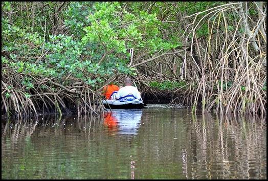01d - exploring a narrow mangrove trail