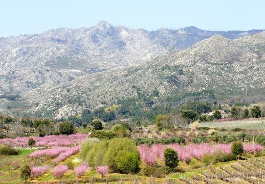 Portugal -primavera na gardunha - Glória Ishizaka