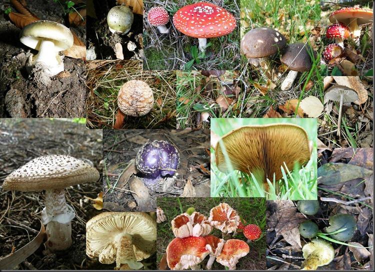 nirvana fungi
