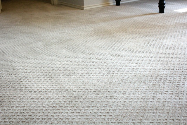 Martha stewart carpet home depot home the honoroak martha stewart carpets carpet ideas ppazfo