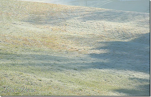Frosty_Field_Oct30