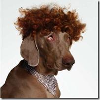 perros disfrazados (2)