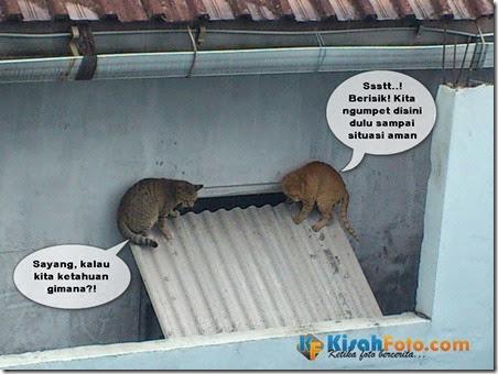 Kucing Pacaran Selingkuh_03