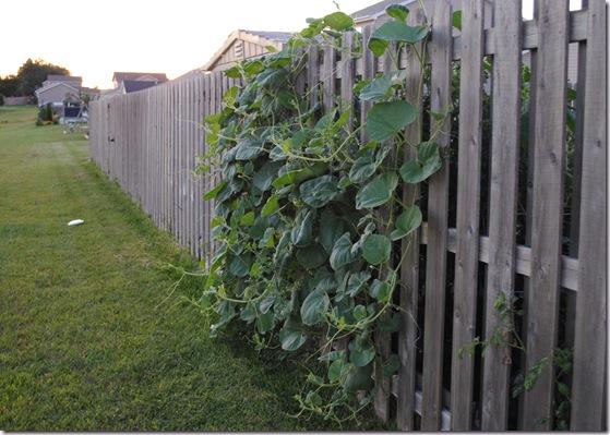 Garden Sept 5 (2)