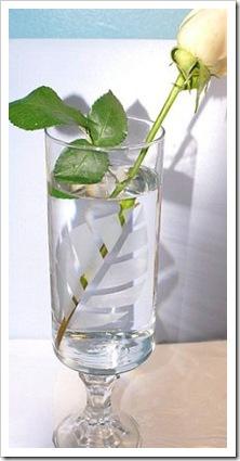 Maggielamarre-etchingglass