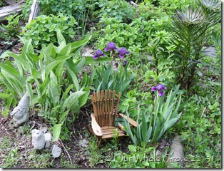Elizabeth's irises and the gnome
