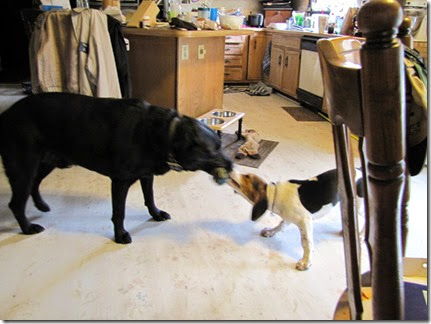 beagle10-01-14r