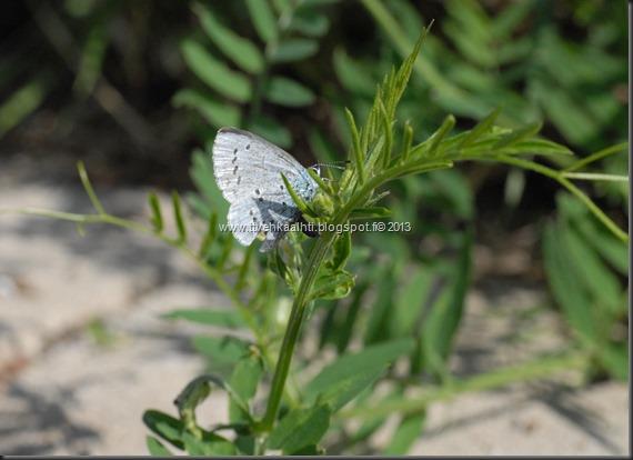 sunnuntain ötökkä kuvat outo perhonen toukka 111