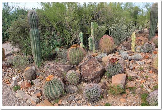 120728_ArizonaSonoraDesertMuseum_099