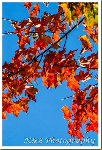 Fall 2013 (23 of 59)