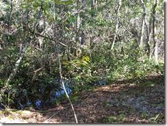 Creek just off trail