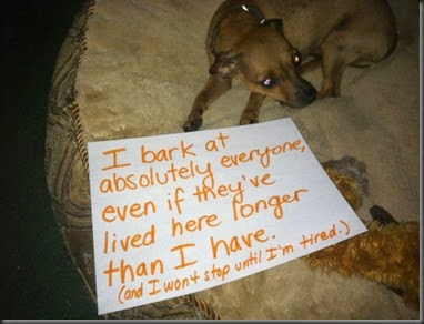 bad_dogs_publicly_shamed_640_26
