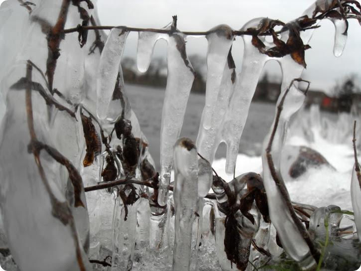 Is ved Damhussøen - januar 2014
