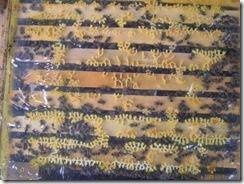 30,10,2011 Pyl a kluci 042