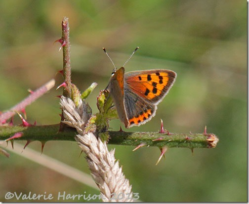 23-small-copper