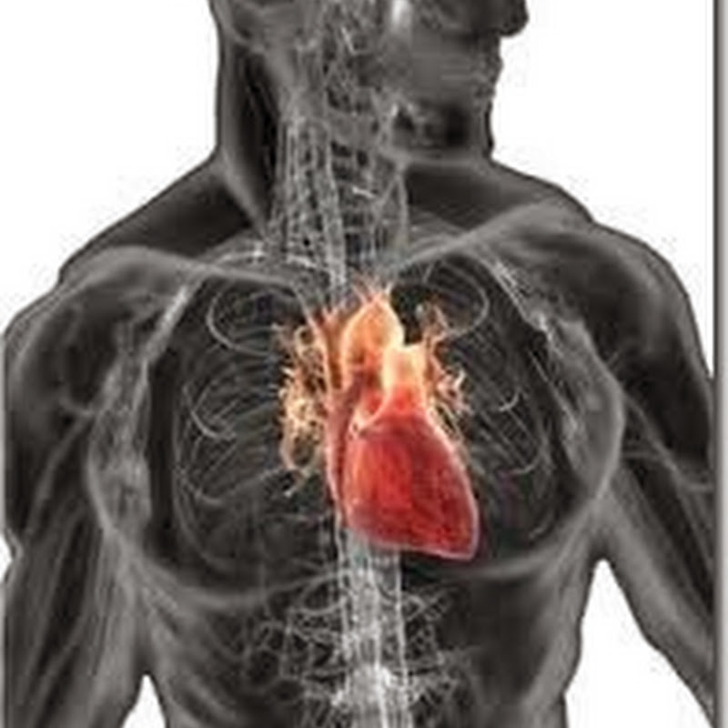 How anabolic steroids (used for bodybuilding) affect heart?