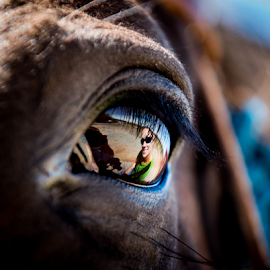 Passion in my eye by Richard Horst - Animals Horses ( look, horese, passion, eye )