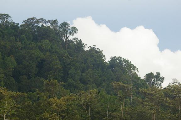 La colline de Pangui. Sukau, 13 août 2011. Photo : J.-M. Gayman