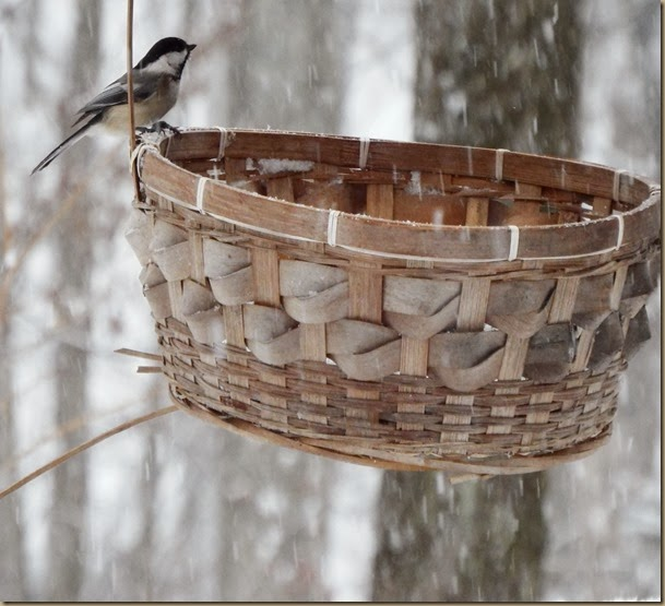 another view of chickadee on bird feeder basket excellent