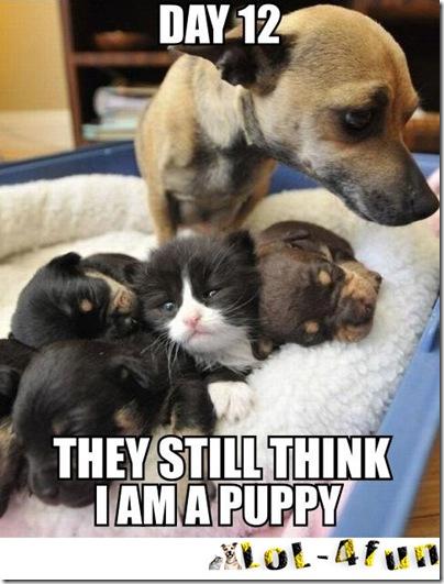 http://lol-4fun.blogspot.com/ Cats  VS  Dogs