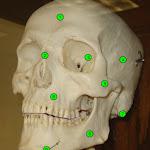 skull_anterior.jpg