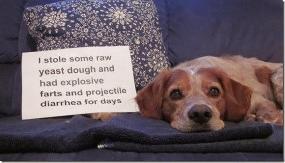 dogs-dirty-secrets-1
