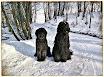 Winter walks 2015 - Cheri, Lily, Ash