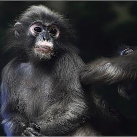 Spa Day by Dennis Ba - Animals Other Mammals