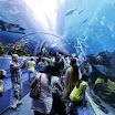 Georgia Aquarium - Atlanta