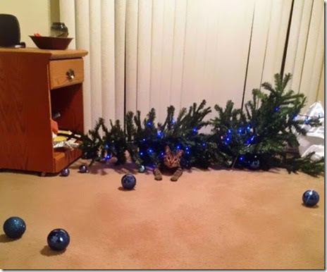 pets-hate-christmas-021