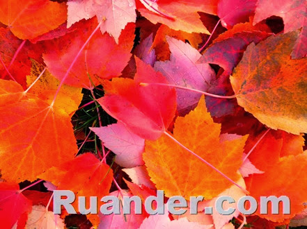 Fall Color 2 Ruander