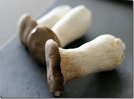 giant-oyster-mushroom-540x358