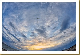 untitled Swans Flight Fish-eye 2 D7K_7548 November 01, 2011 NIKON D7000