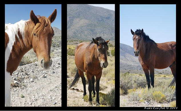 Cold Creek Horse Triptych-2