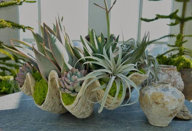 succulents livinggreen.com 536934_382942515057381_1793678392_n