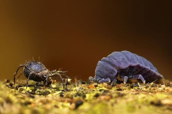 fotografia-macro-insetos-10.jpg