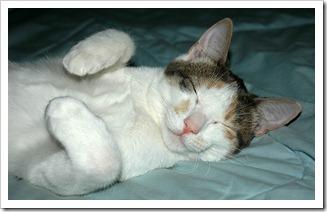 CatsB5_Choco