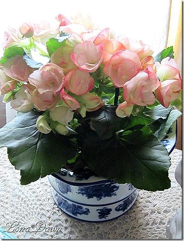 Begonias3_Pink