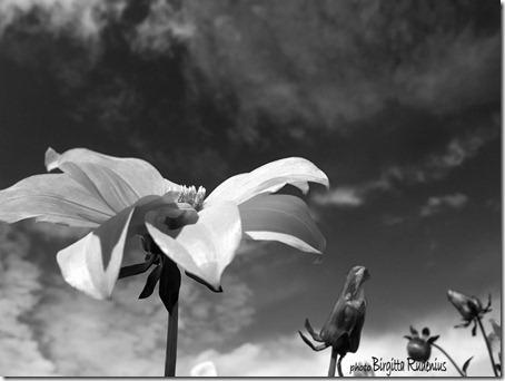 bw_20120930_blom1
