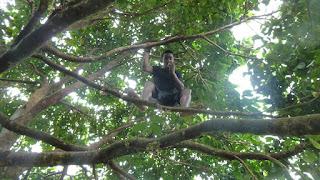 Isa holt Obst vom Baum; Wanderung im Koroyanitu National Heritage Park.