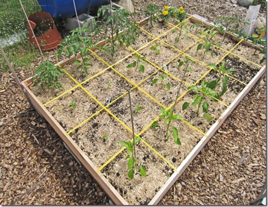Bed with tomatoes and peppers