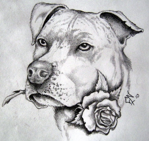 Pitbull dog drawings in pencil - photo#18
