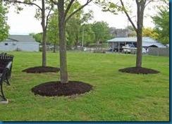 mulch trees