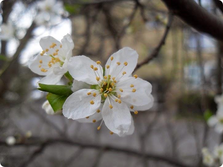 Forår...