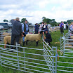 Sheep & Rare Breeds