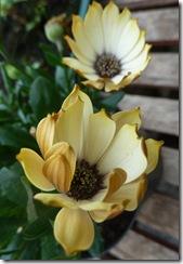stobshiel flower2a