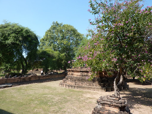 Lush, if parched greenery surrounds most of Ayutthaya