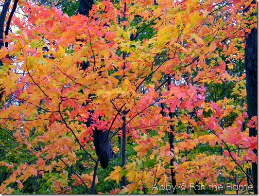 Fall Beauty 031