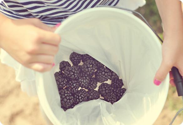 Stellas bucket