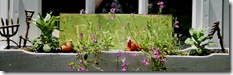 Flowers_Planter